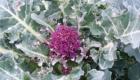spring09-010.jpg