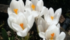 spring09-018.jpg
