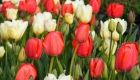 spring_colour