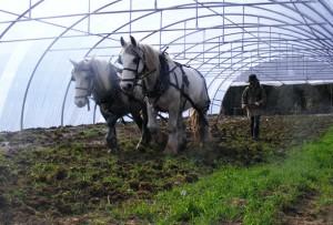 jimcronin_ploughing